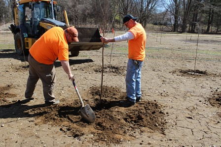 Two Men in Orange Planting Trees